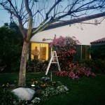 Larry Sultan, from Pictures From Home