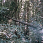 Ori Gersht, film stills from The Forest, 16 mm film transferred to video in a 13-minute loop, 2005*