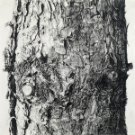 """Sandra Allen Aegis, 2011 Graphite on paper 40 x 40"""" On view at Carroll & Sons through April 13"""