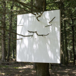 Hanging Wall in Hemlock Tree by Letha Wilson. Image courtesy of the artist