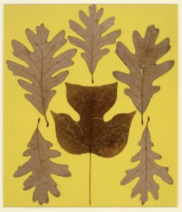 "Josef Albers, ""Leaf Study IX,"" c. 1940, leaves on paper, 28 x 24¾ inches. (c) The Josef and Anni Albers Foundation/ Artists Rights Society New York. Photo: Tim Nighswander/Imaging 4 Art."