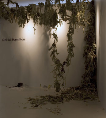 Dell Hamilton's Banana Republic installation